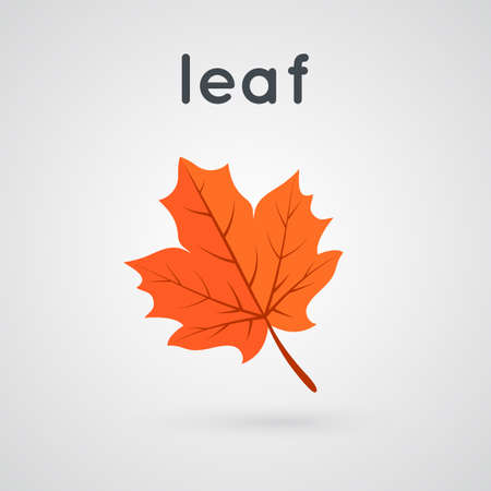 fall leaf: fall leaf and word Illustration
