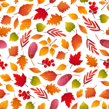 Colorful fall leaves and rowan berries on white backdrop.