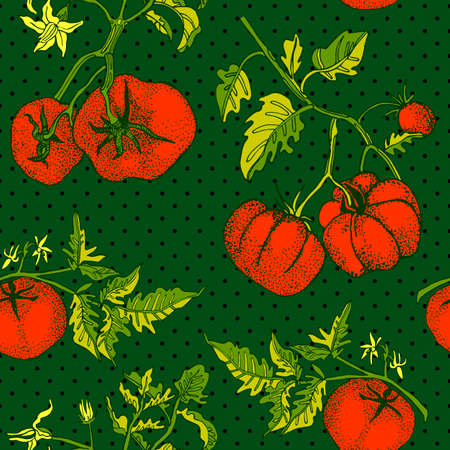 Seamless pattern with an ornament from naturally drawn tomatoes. Can be used in design on textiles, wrapping paper.  イラスト・ベクター素材