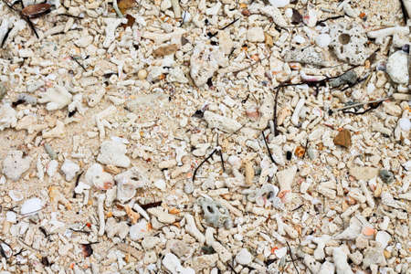leavings: corals on beach Stock Photo