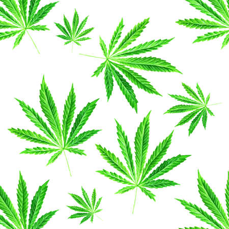 cannabinol: Bright green cannabis sativa leaves painted in watercolor. Realistic scientific illustration of plant. Hand drawn marijuana illustration isolated on white background. Design element