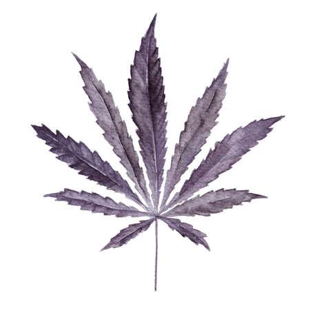 Marijuana hemp leaf on white background. Bright cannabis sativa leaf painted in watercolor. Realistic illustration of plant. Hand drawn marijuana illustration isolated on white background.