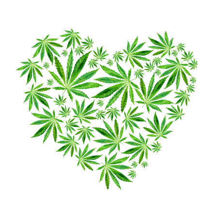 Heart of Bright green cannabis sativa leaves painted in watercolor. Realistic scientific illustration of plant. Hand drawn marijuana illustration isolated on white background. Design element