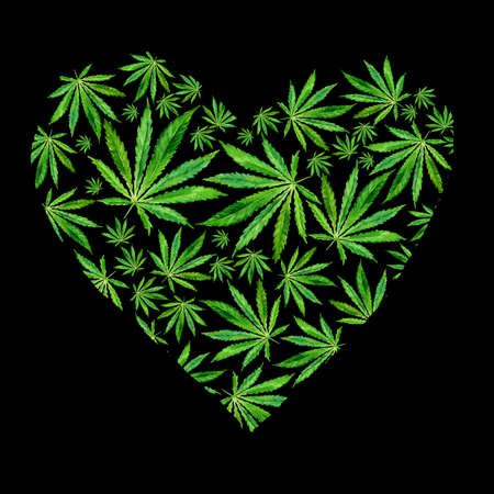 Heart of Bright green cannabis sativa leaves painted in watercolor. Realistic scientific illustration of plant. Hand drawn marijuana illustration isolated on black background. Design element