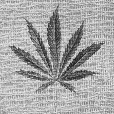 Gray cannabis sativa leaf painted in watercolor. Realistic scientific illustration of plant. Hand drawn marijuana illustration on burlap fabric texture. Design element