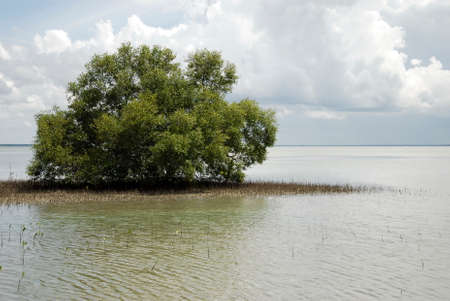 mangrove forest: mangrove forest Stock Photo