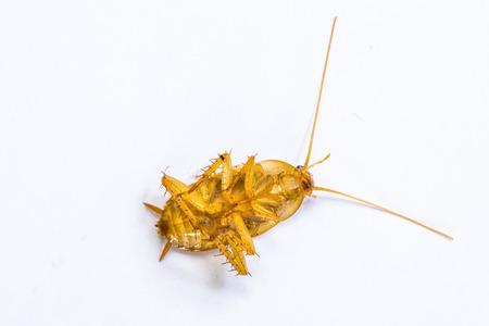 unhealthiness: dead cockroack Stock Photo