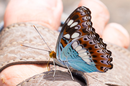 bogey: beautiful butterfly Stock Photo