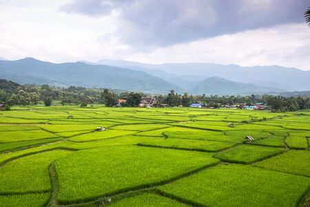 paddy fields: Thailand rice fields Stock Photo
