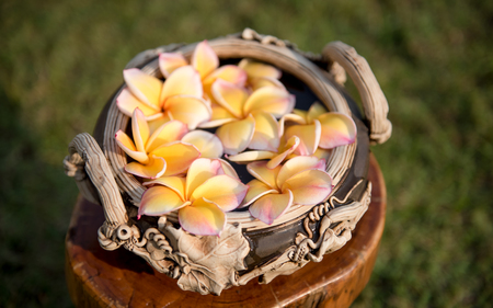 ranging: plumeria flower floating on the water,soft focus Stock Photo