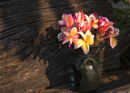 ranging: Plumeria flower in a vase,soft focus Stock Photo