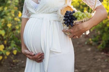 vineyard at sunset: Belly of pregnant girl is wearing white dress is holding basket  in autumn vineyard, sunset time Stock Photo