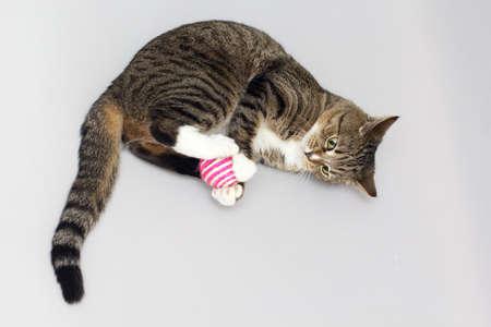 Le chat adulte Tabby joue avec la balle Banque d'images