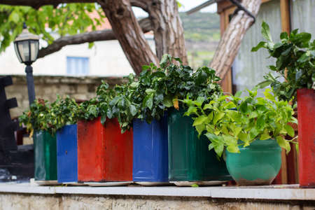 Colorful pots with flowers in Cyprus Stock Photo
