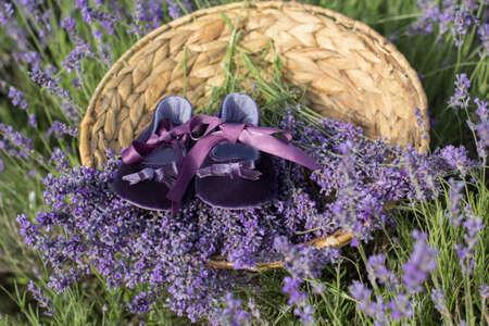 purple shoes: Purple babies shoes in basket in lavender field