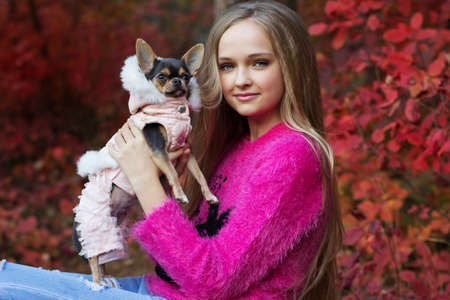long hair chihuahua: Beautiful teen girl with long hair is wearing warm pink winter sweater is holding small chihuahua dog in autumn forest