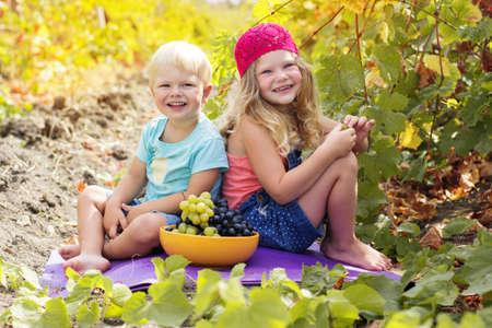 ni�os sanos: Una ni�a linda y su joven hermano al aire libre est�n comiendo las uvas en la vi�a del oto�o Foto de archivo