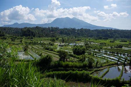 Terrace rice fields in morning sunrise, Amed, Bali, Indonesia Standard-Bild