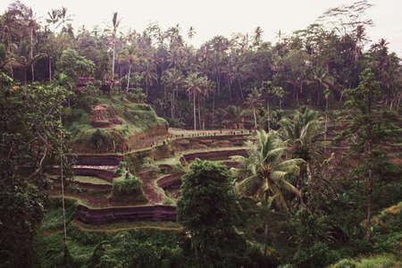 Tegalalang rice terrace fields in morning sunrise, Ubud, Bali, Indonesia. Standard-Bild