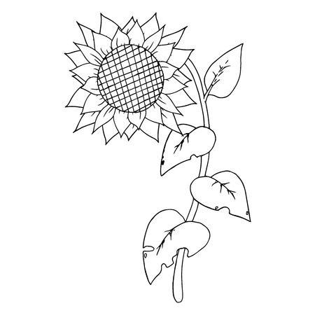 Sunflower on a stalk with carved leaves. Vector illustration.