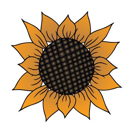 Sunflower. Vector illustration.