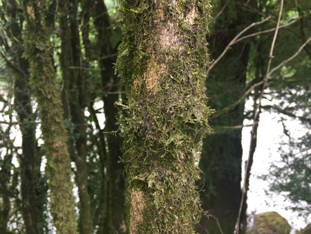 Green moss on a tree. Trunk of a tree covered with moss.
