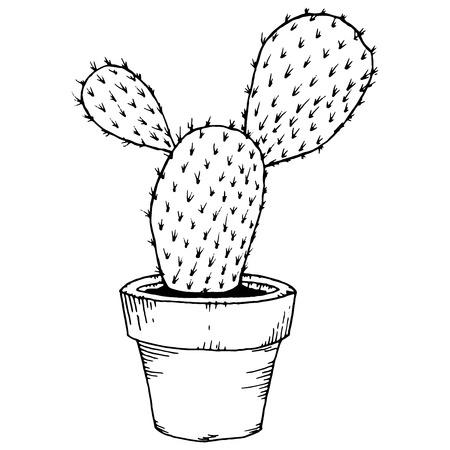 Hand drawn cactus in pot . Plant art graphic, element floral houseplant. Vector illustration cactus. 일러스트