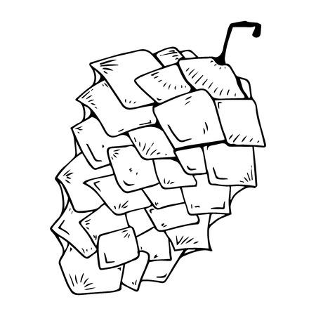 Pine cone icon. Vector illustration of a pine cone. Pine cone hand drawn. Vektorové ilustrace