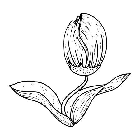 Tulip icon. Vector illustration of a tulip flower. Hand drawn tulip. Illustration