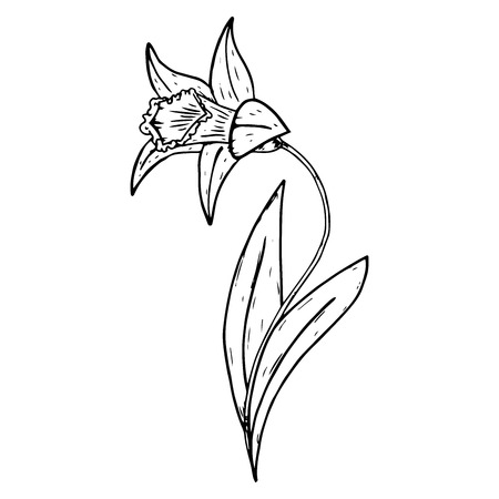 Flower narcissus icon. Vector illustration of a daffodil. Hand drawn flower.