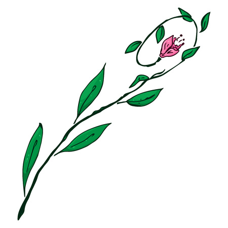 Flower icon. Vector illustration of a flower. Hand drawn flower.