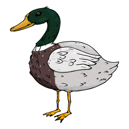 Duck icon. Vector illustration of waterfowl duck. Duck hand drawn.