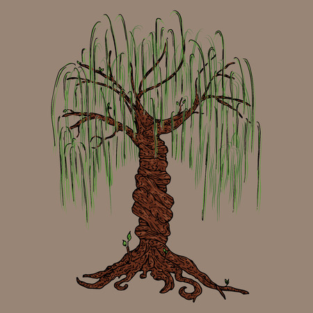 Tree icon. Vector illustration big tree willow. Hand drawn weeping willow tree. Ilustração