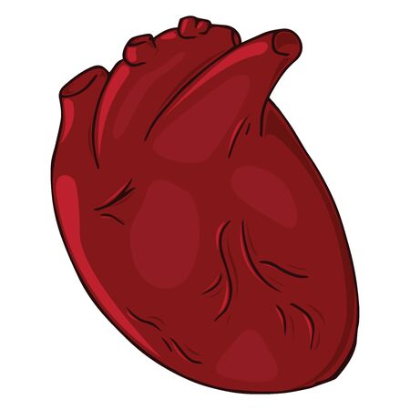 Heart icon. Vector illustration of a human heart. Anatomical heart hand drawn.