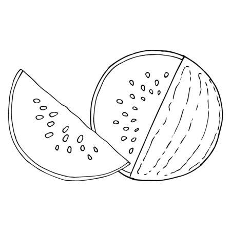 Watermelon icon. Vector illustration of a watermelon.  Hand drawn watermelon. Summer berry sketch.