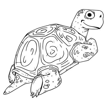Turtle. Vector illustration of a sea turtle. Hand drawn cartoon tortoise.