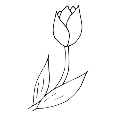 Tulip icon. Vector illustration of spring tulip flower. Hand drawn spring tulip.  イラスト・ベクター素材