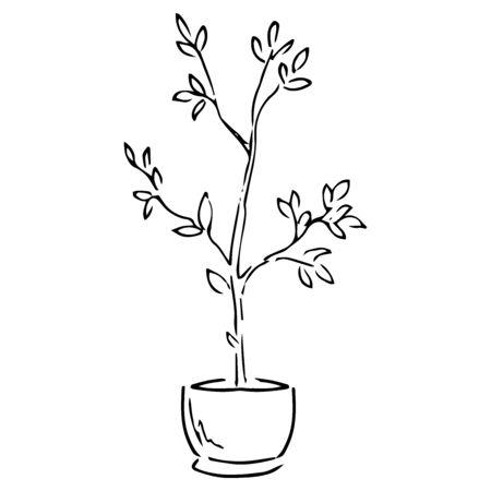 Spring garden flowers. Vector illustration of garden flowers in a pot. Hand drawn spring flowers in a pot.