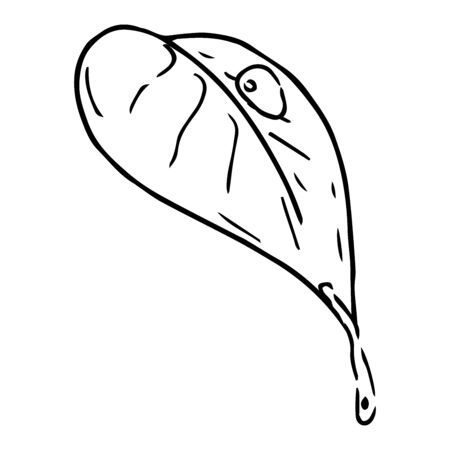 Spring leaf icon. Vector illustration of a young leaflet. Hand drawn  spring leaf with drops.