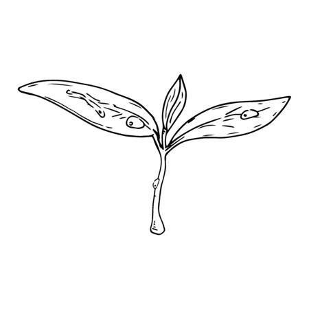 Young sprout icon. Vector illustration of a young plant for spring planting. Hand drawn plant, flower.