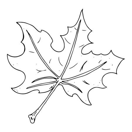 Maple leaf. Vector illustration of a maple leaf. Hand drawn red maple leaf.
