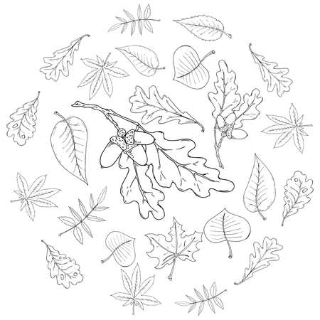 Set leaves. Autumn, spring leaves. Vector illustration of set leaves. Hand drawn leaves.