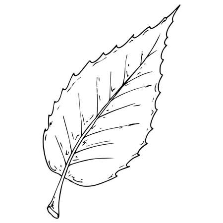 Hand drawn leaf of the tree. Vector illustration of a falling leaf of a tree.  Autumn leaf.