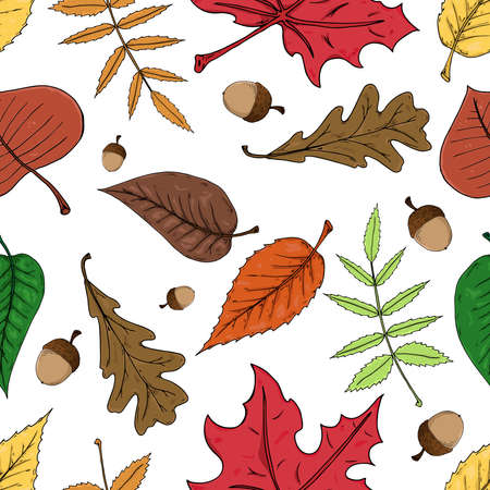 Autumn leaves with acorns seamless pattern. Vector illustration of autumn leaves seamless pattern. Hand drawn autumn leaves. Illustration
