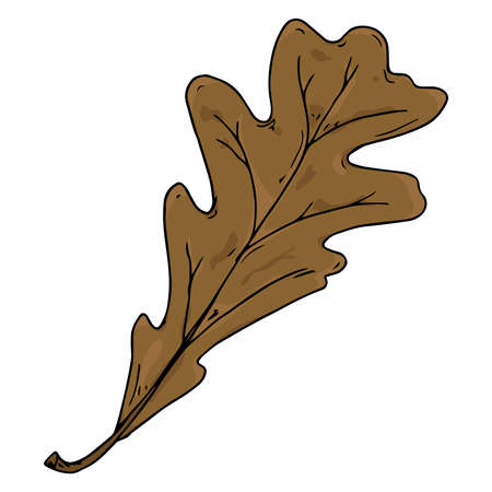 Oak leaf. Vector illustration of a falling oak leaf. Hand drawn oak leaf. Autumn leaf of an oak tree.