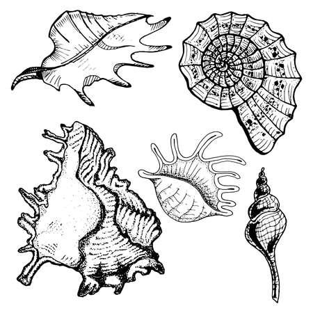Set of sea shells. Vector illustration of beautiful sea shells. Hand drawn doodle seashells.