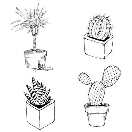 Set of house plants in pots. Vector illustration of a domestic dracaena plant, cactus, succulents. Hand drawn palm tree in a pot.