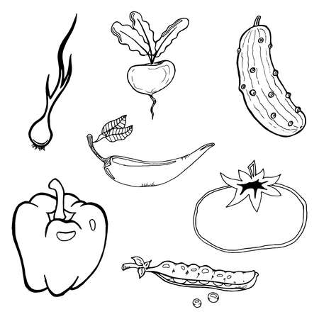 Set of vegetables. Vector illustration of beet, pepper, onion, cucumber, tomato. Hand drawn tomato and cucumber, green peas. Healthy vegetables.