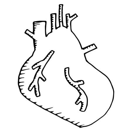 Anatomical heart. Vector illustration of the human heart. Hand drawn set human hearts. For cardiology or medical design. Vettoriali