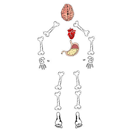 Human organs set with brain heart bones stomach. Skeleton of a man with internal organs. Vector illustration of human bones, brain, heart, stomach.